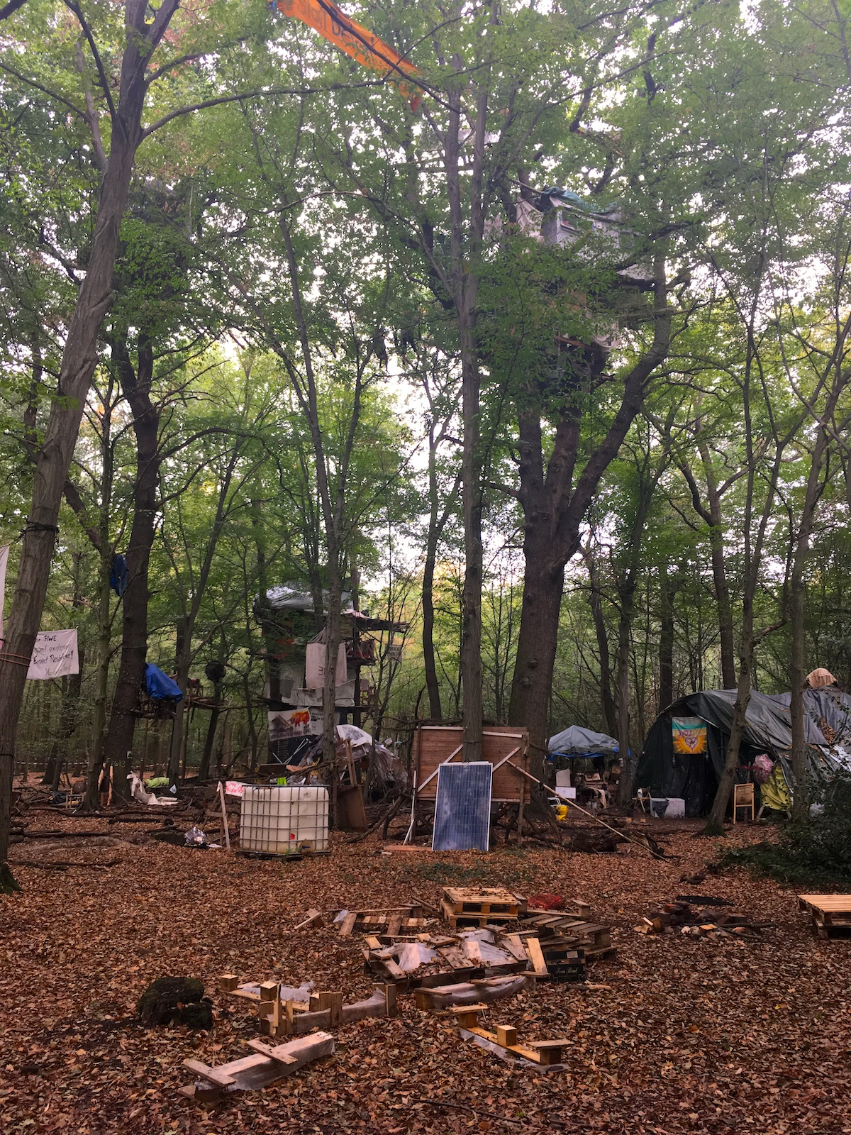 hambacherforst august 2018